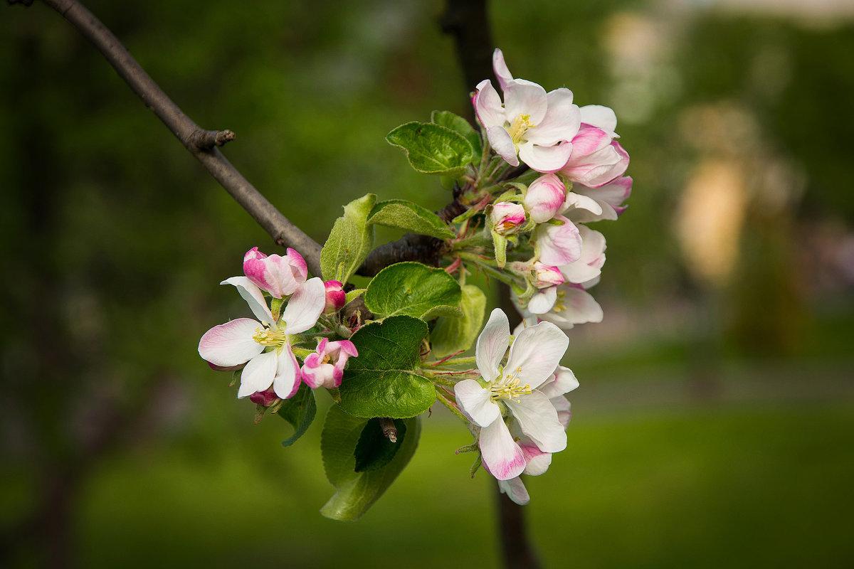 Весна. - Лия Таракина