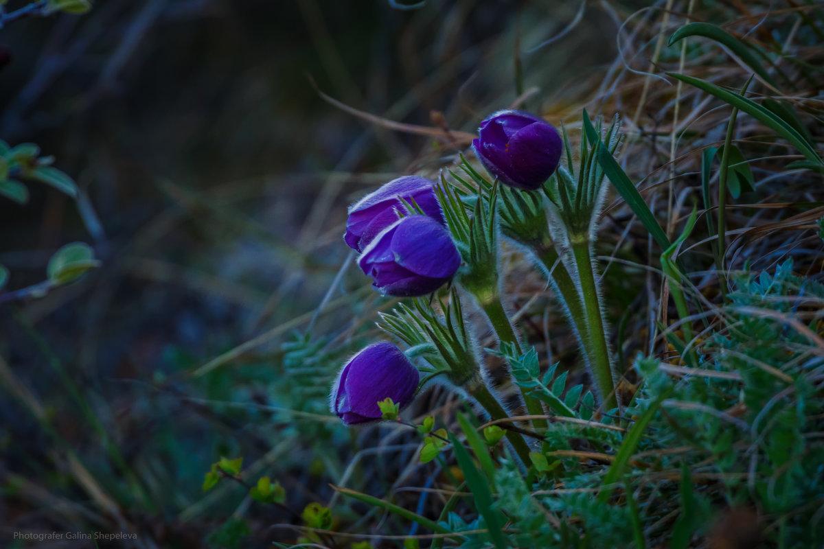 Сон - трава - Галина Шепелева