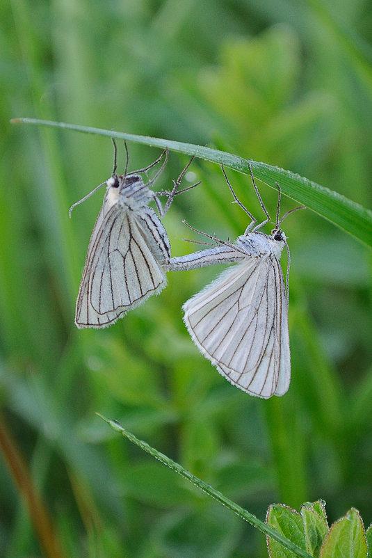 Бабочки - Сергей Цегельник