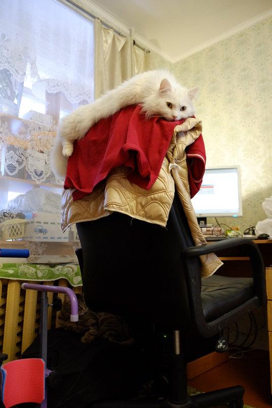 Меховой подголовник из натуральной кошки - Сергей Ткаченко