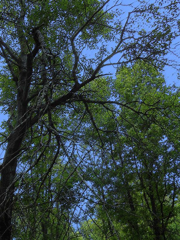 деревья - Юлия Денискина