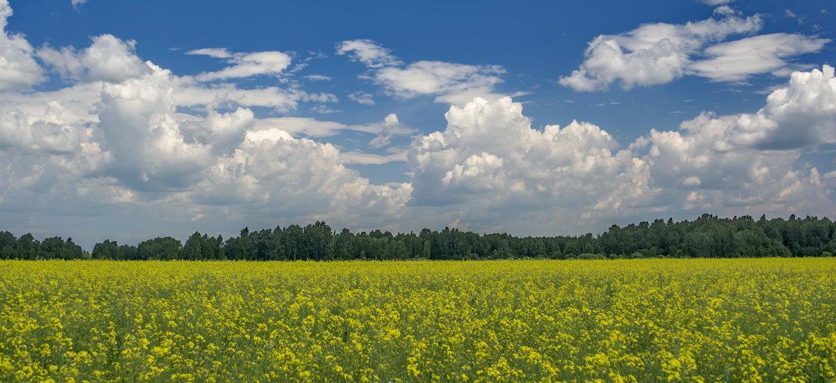 Просто поле и просто небо - Михаил Полыгалов