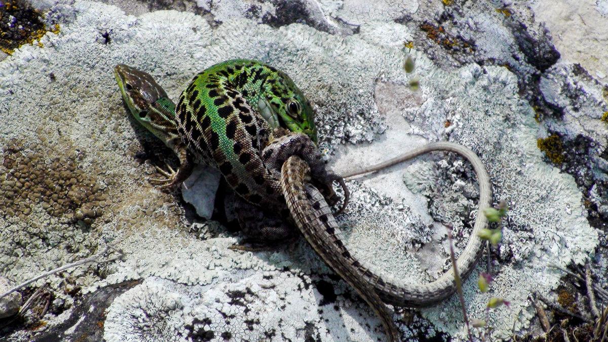 ящерецы - Тамара Мадюдина