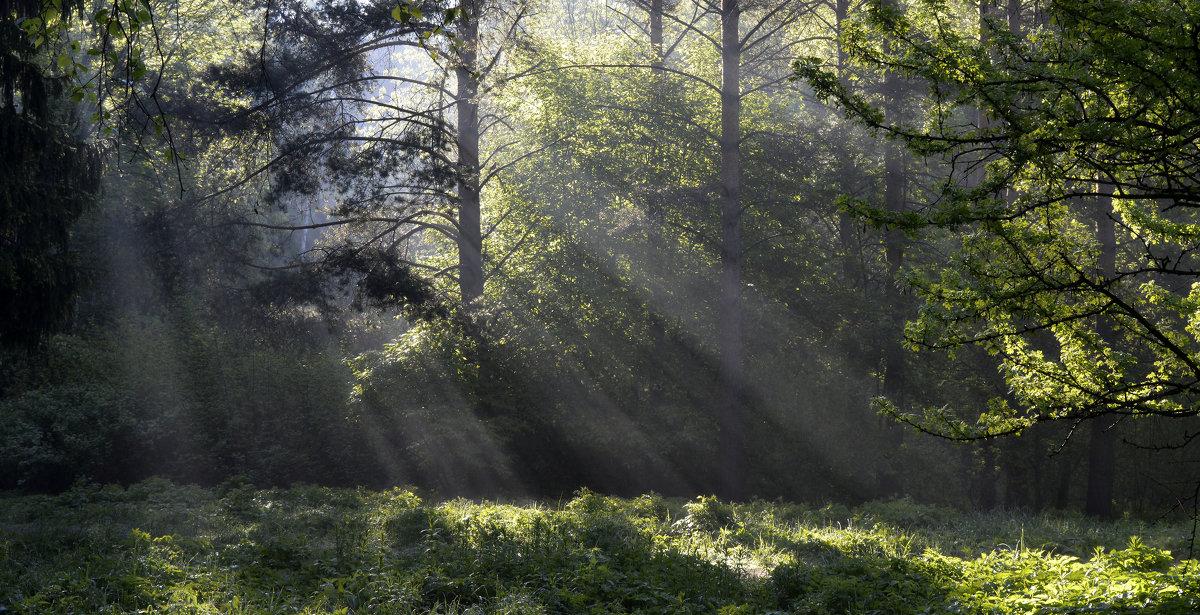 Утро на поляне.... - Юрий Цыплятников