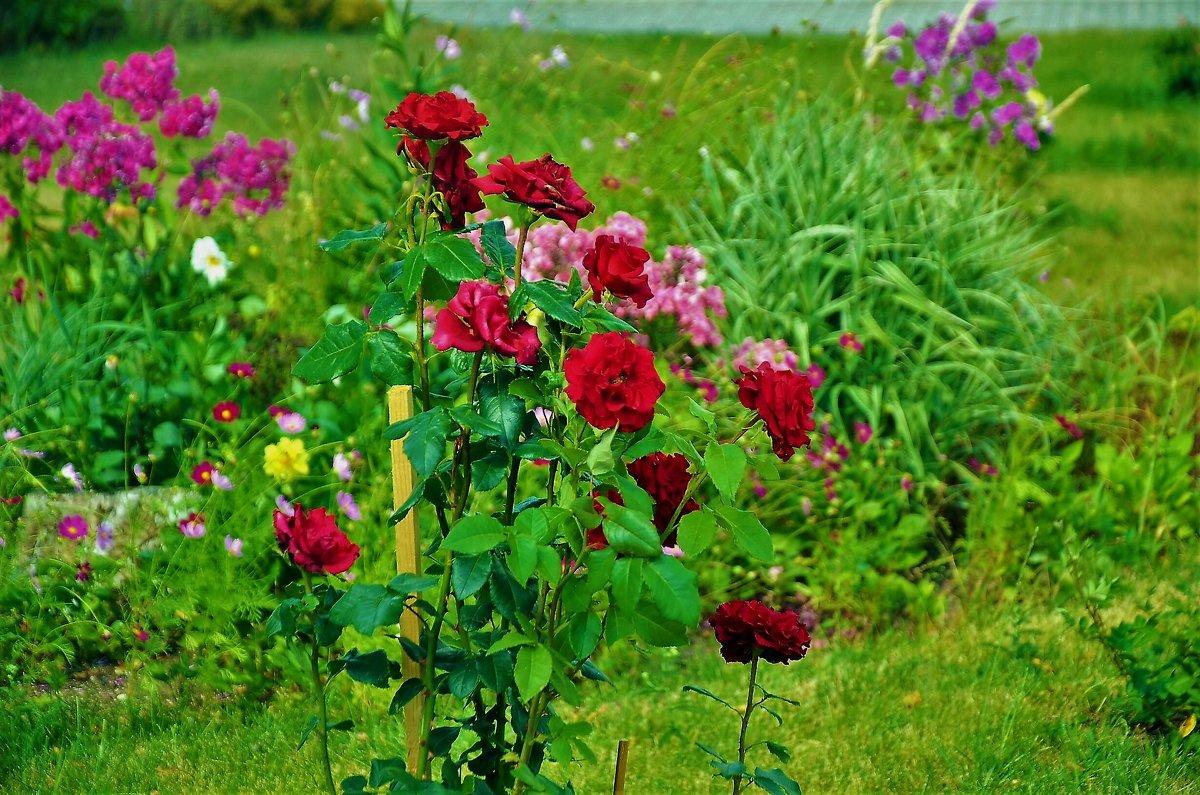 Монастырские розы... - Sergey Gordoff