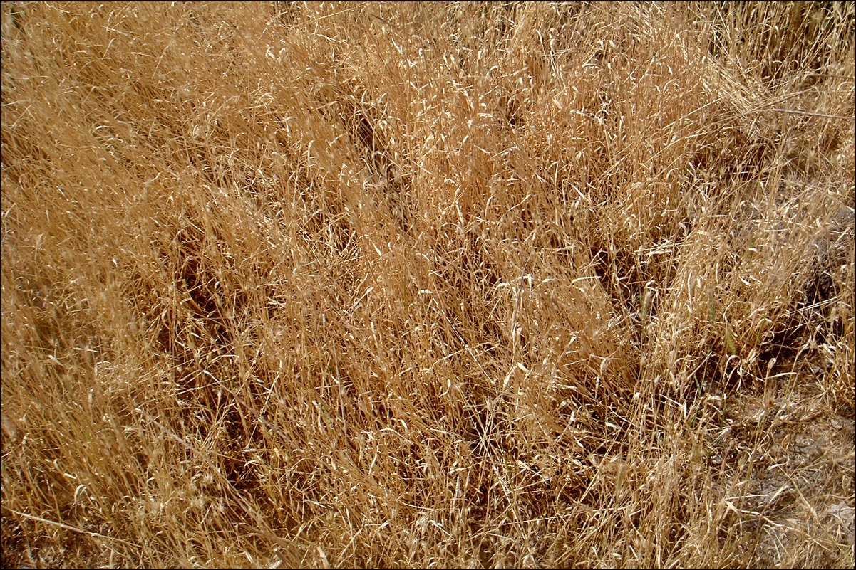 Выжженные травы июня - Нина Корешкова