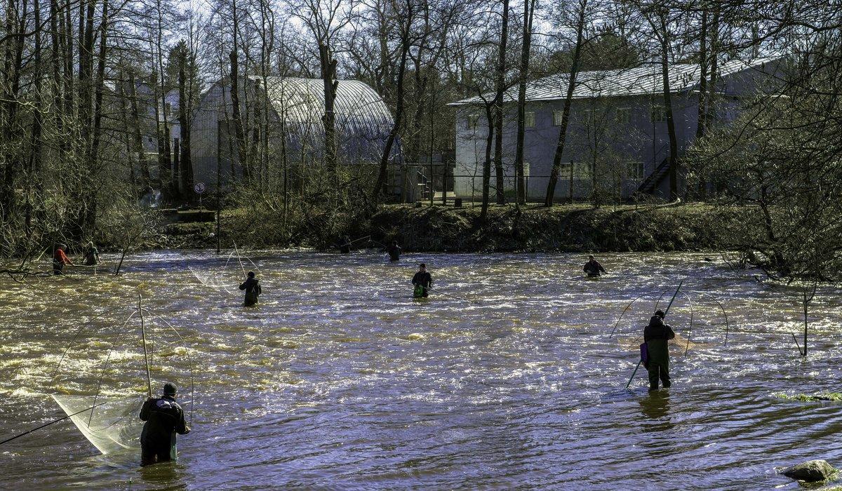 Так ловят корюшку в реке Сестра - Tatiana Poliakova
