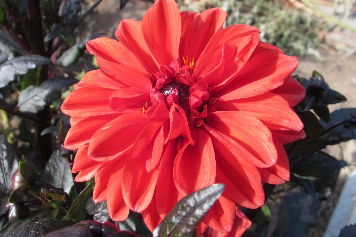 цветок - Валерий A.