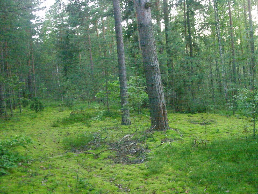 В окрестностях урочища Большое болото - Виктор Мухин