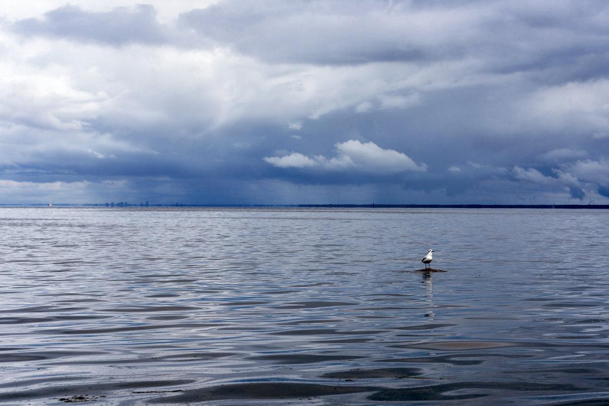 Одинокая чайка - Сергей Добрыднев