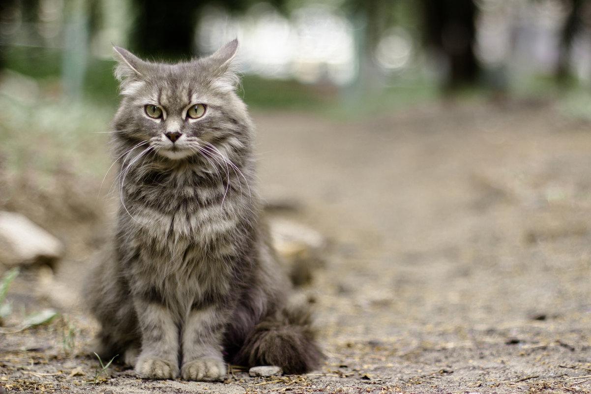 Кошка - Van Der Graaf