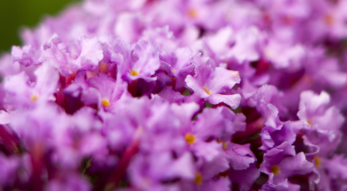 Цветы - Erizo Espinoso
