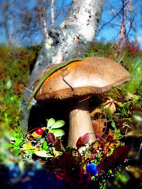 По грибы по ягоды.... - Анна Приходько