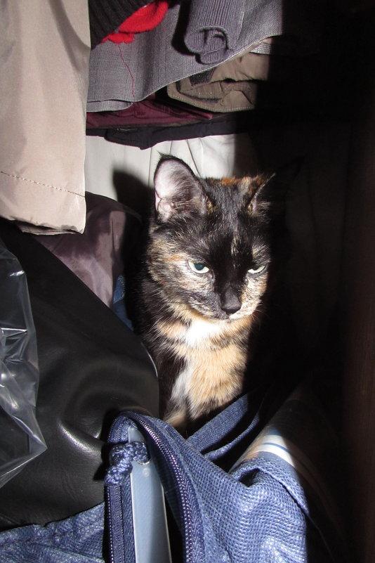 Мила в шкафу - Валерий A.