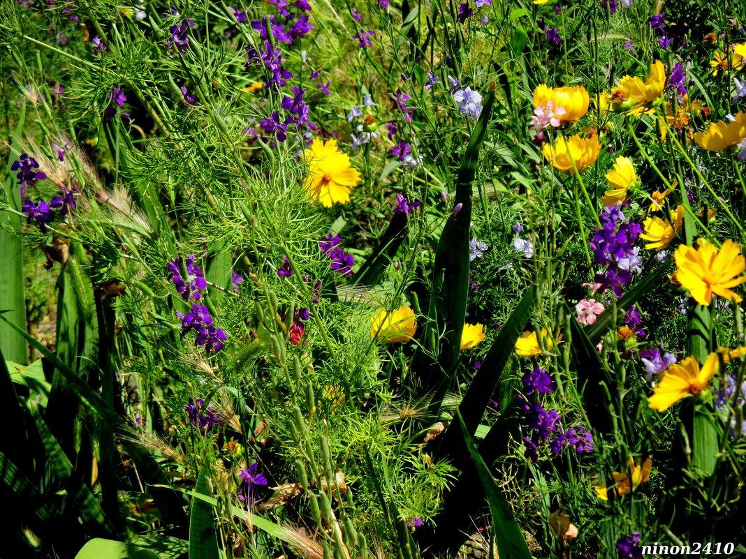 Разноцветье лета - Нина Бутко