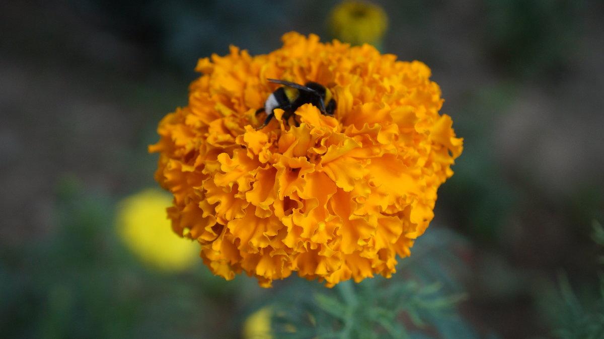 на цветке - Alexandr Staroverov