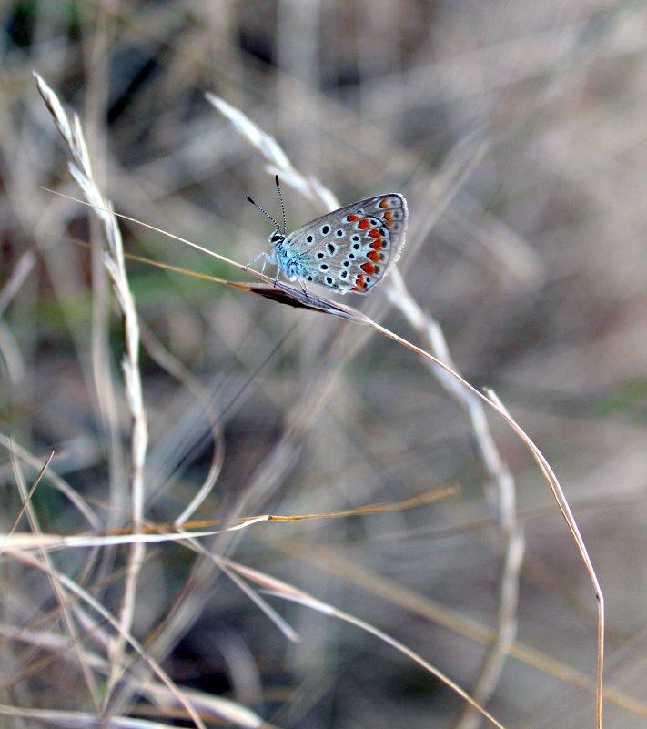 Маленькая бабочка - Ольга Анх