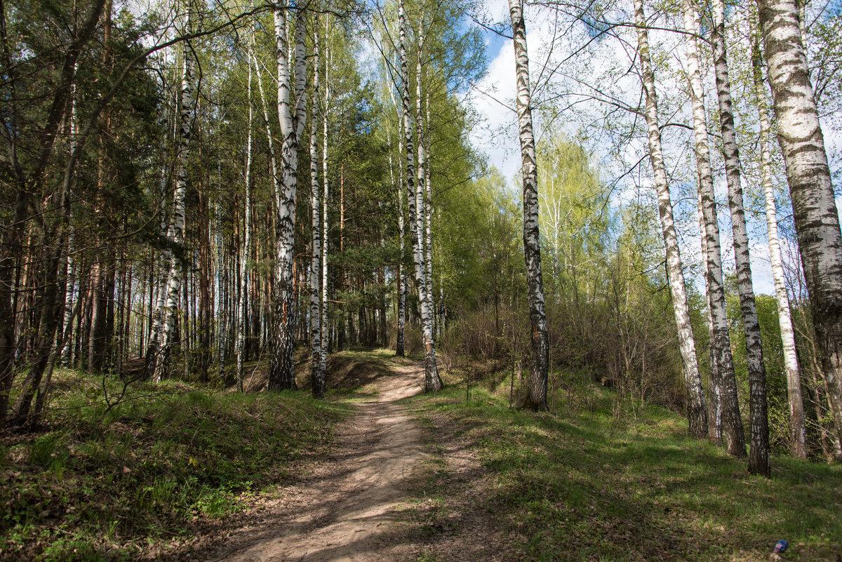 Лес весной. - Владимир Безбородов