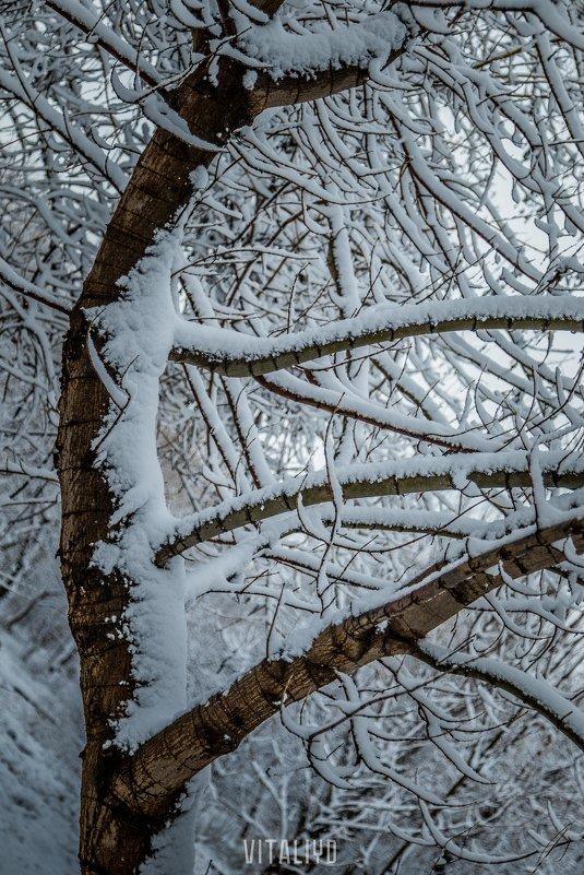 snow - Vitaliy Dankov
