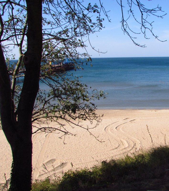 дерево на фоне прекрасного синего моря. - Варвара Маевская