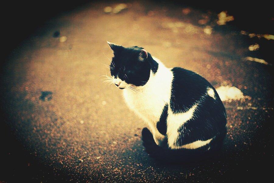 Мир кошек! - Натали Пам