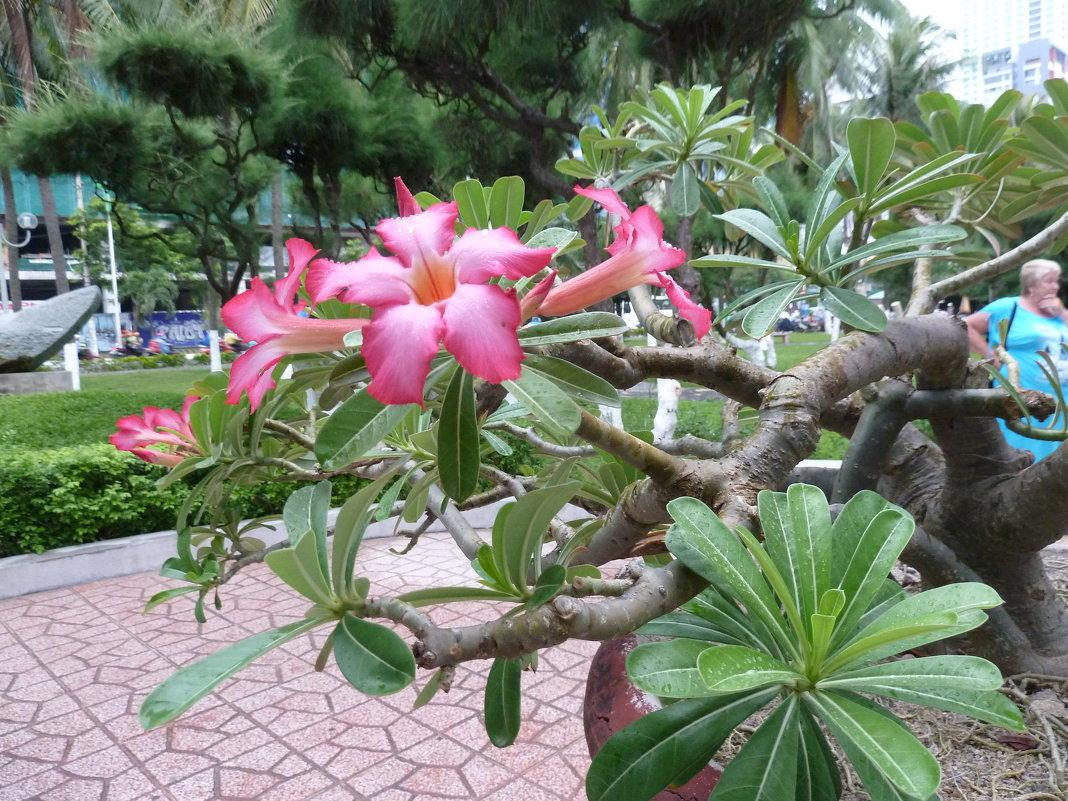 Цветы Вьетнама - Галина