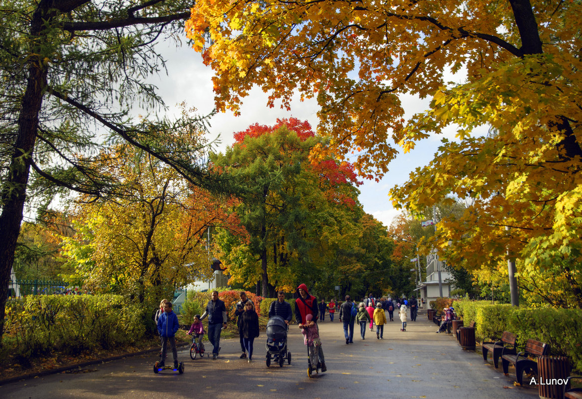 Золотая осень в Сокольниках - Anatoley Lunov