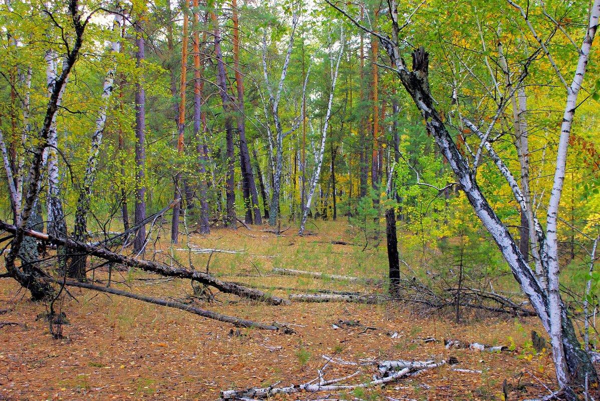 В лесу. Когда вокруг хозяйничает осень. - Валентина ツ ღ✿ღ