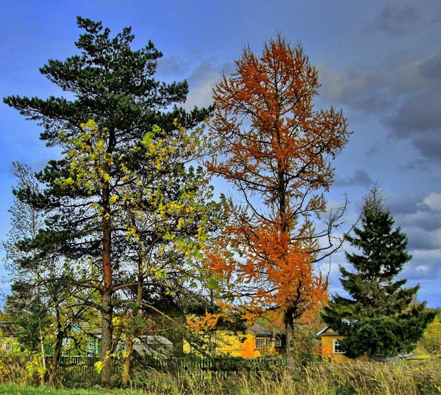 Сосна, ясень, лиственница, и ель позади.. - Sergey Serebrykov