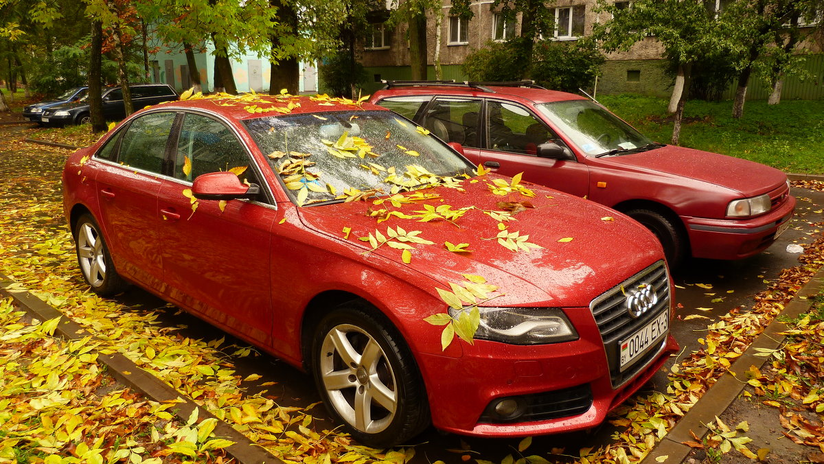 жёлтое и красное - любимые цвета осени - Александр Прокудин
