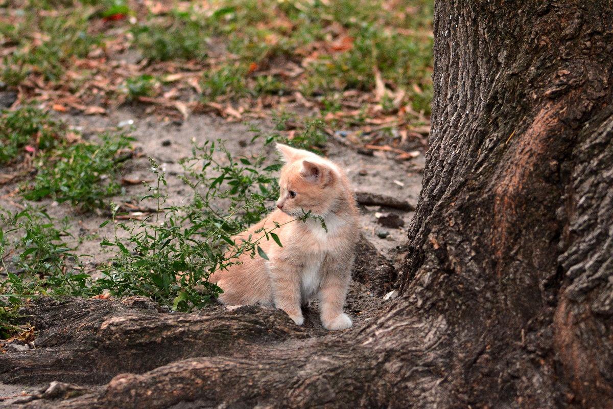 Рыжий котенок - Олег Шендерюк