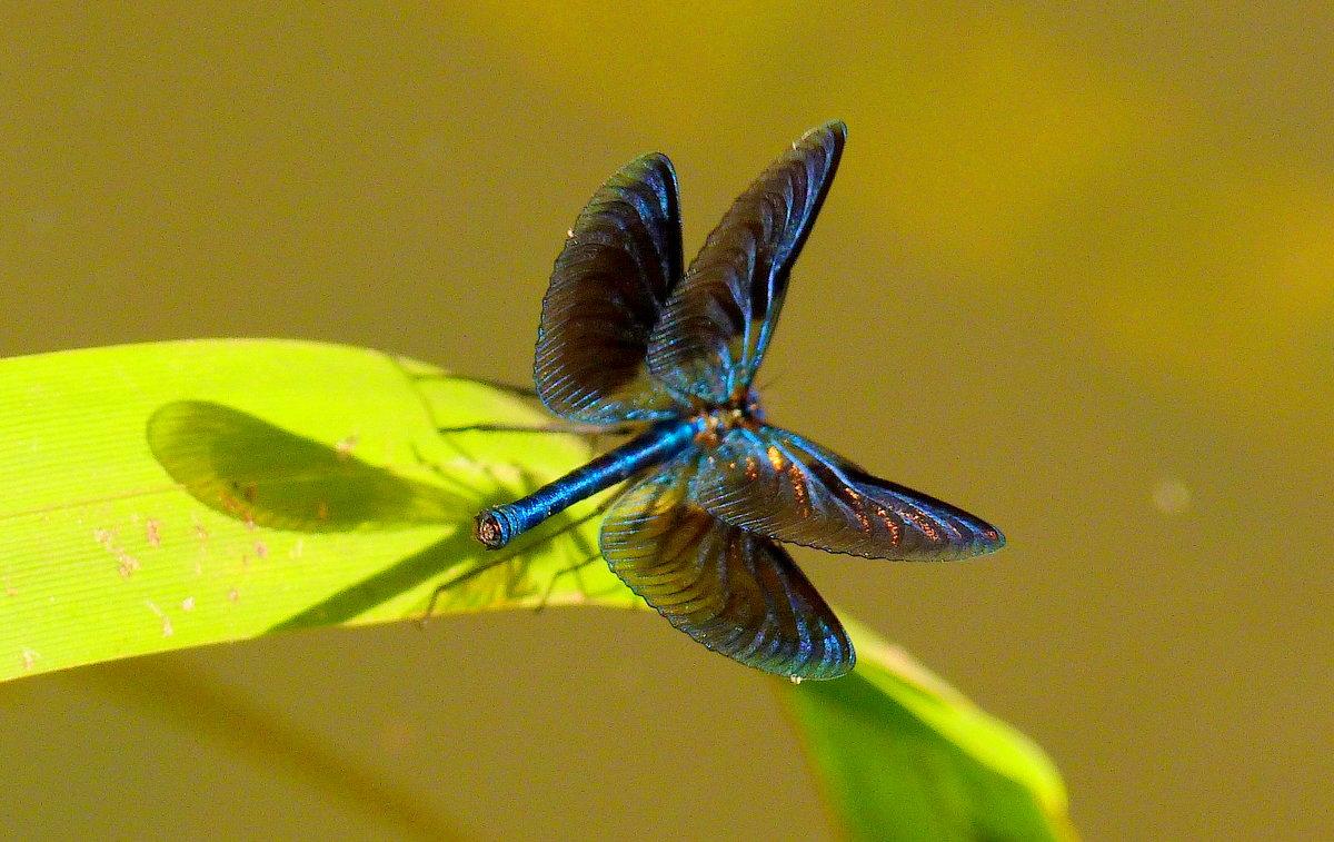 красотка в позе бабочки - Александр Прокудин