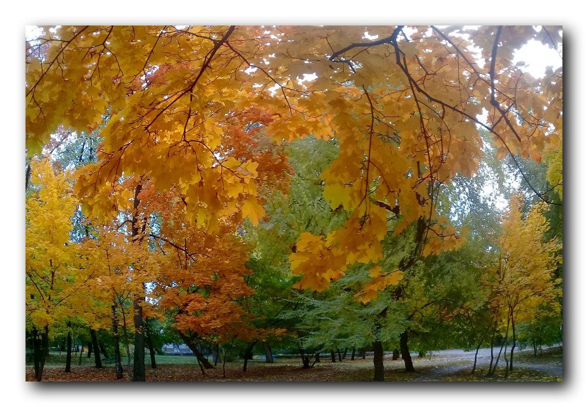 Краски октября. - Чария Зоя