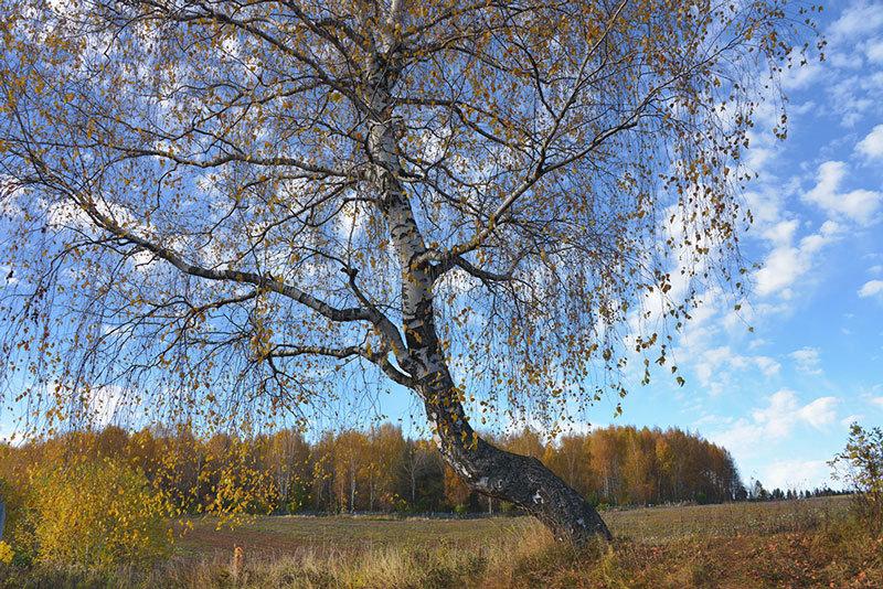 Падают листья... - Борис Гуревич