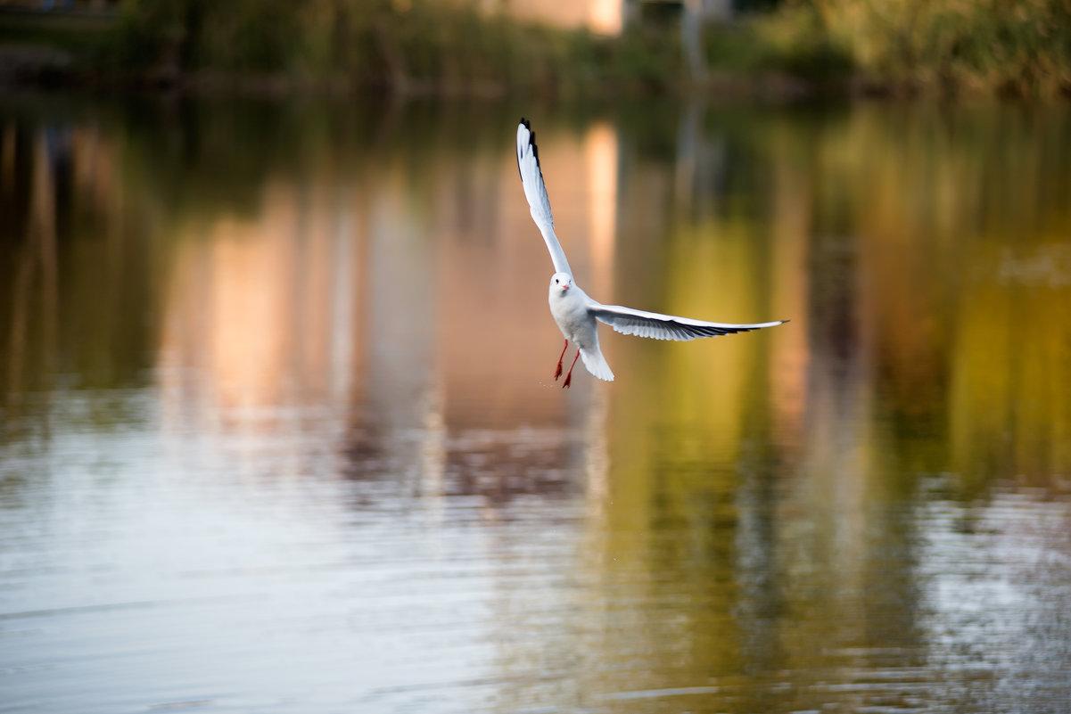 Одинокая чайка - Денис Красненко