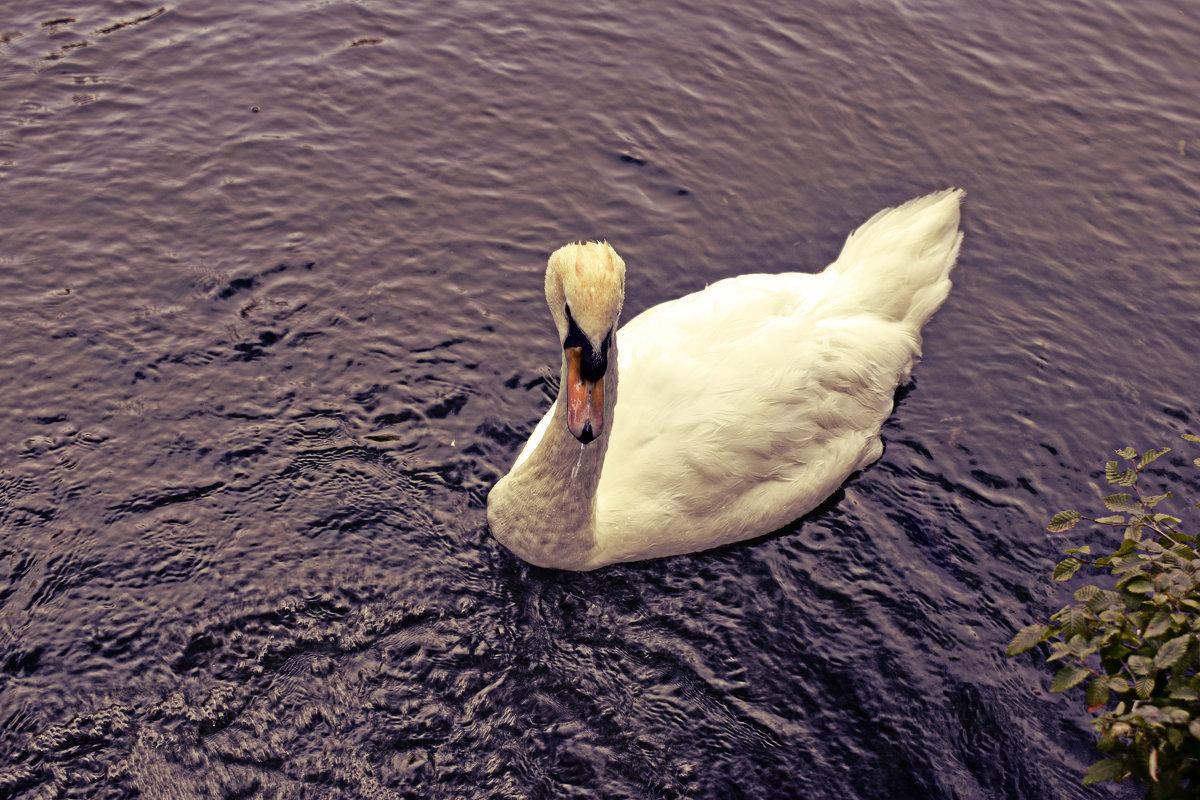 Лебедь белая - Наталья Базанова