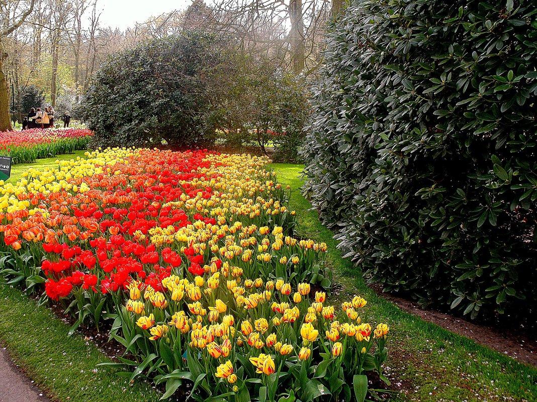 Голландская весна - svetlana.voskresenskaia