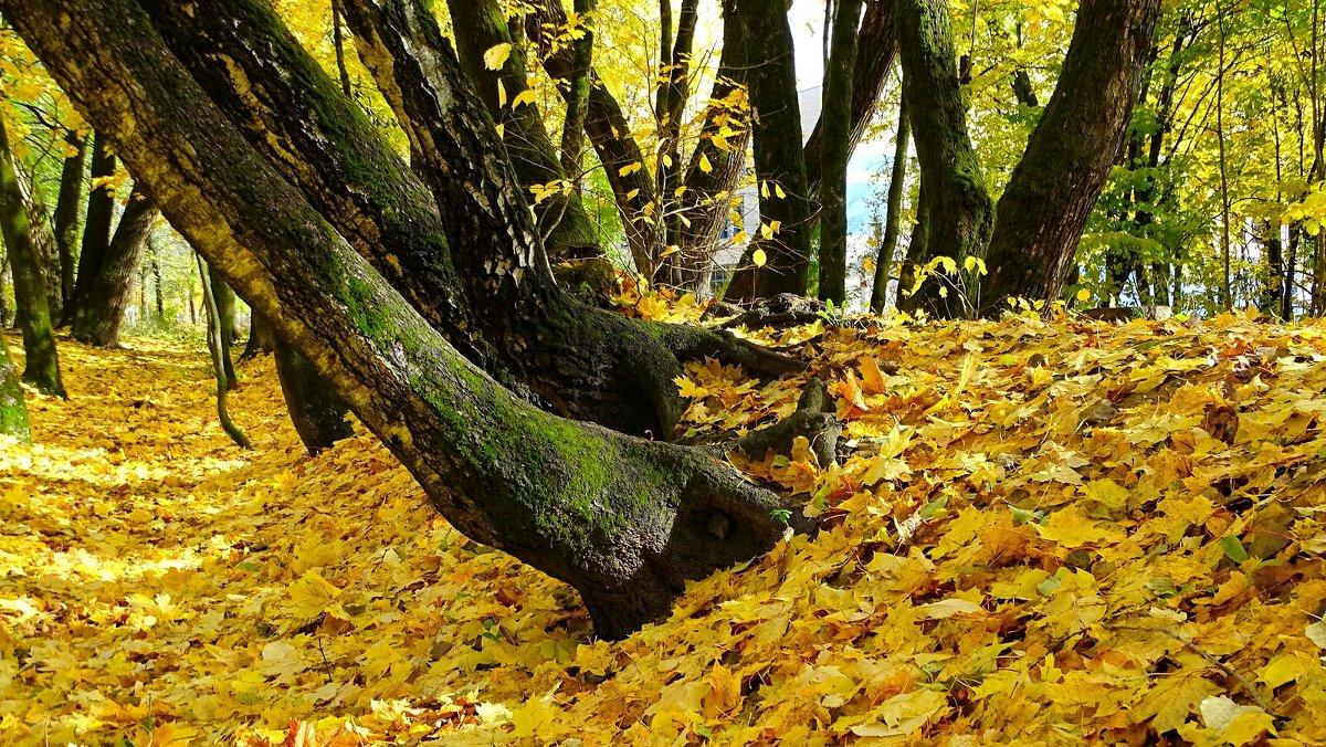 Осень золотая - Милешкин Владимир Алексеевич