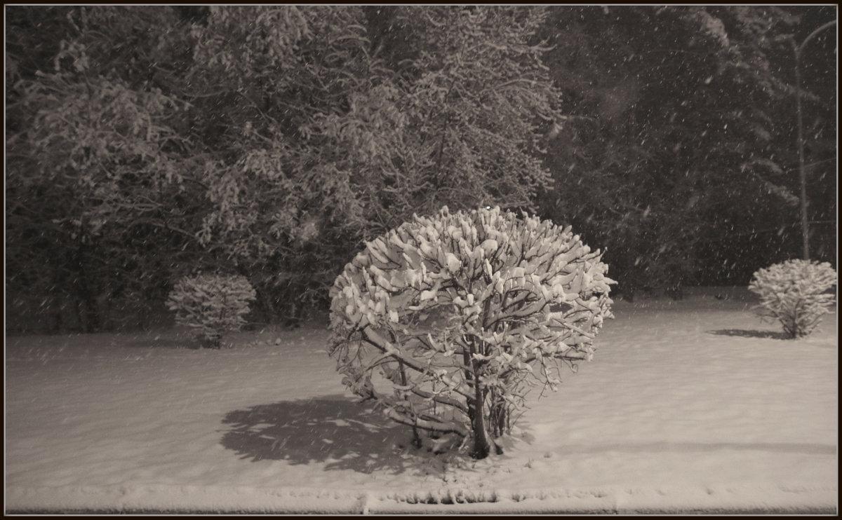 Куст накрытый снегом - Алексей Хвастунов