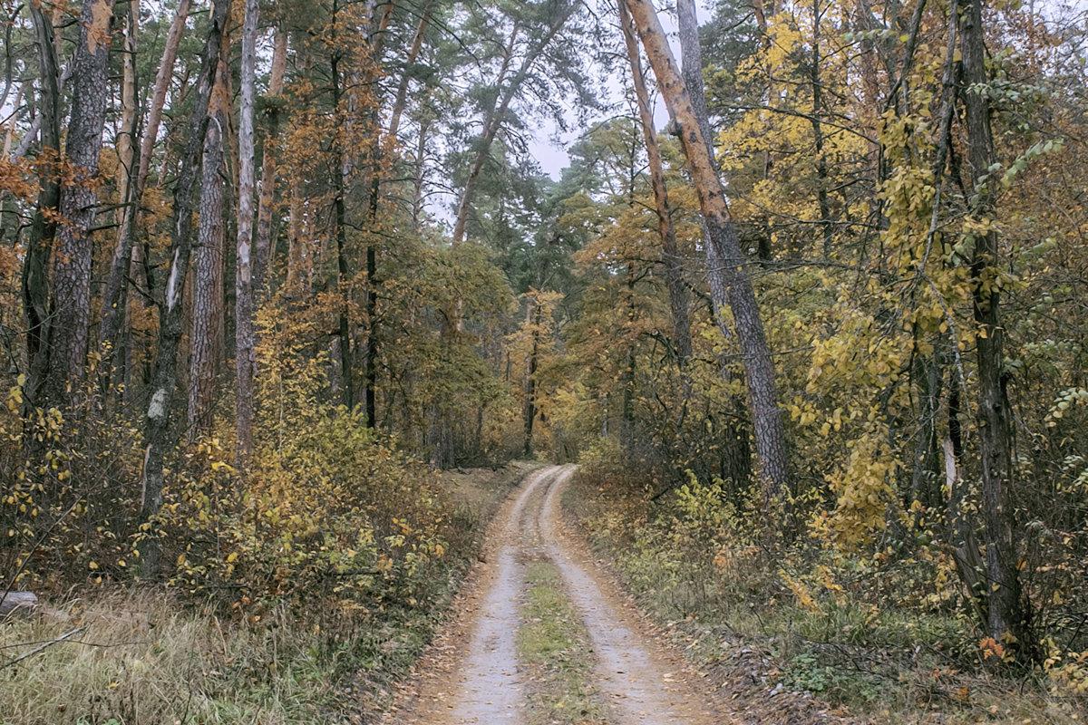 лесная тропа - Геннадий Свистов