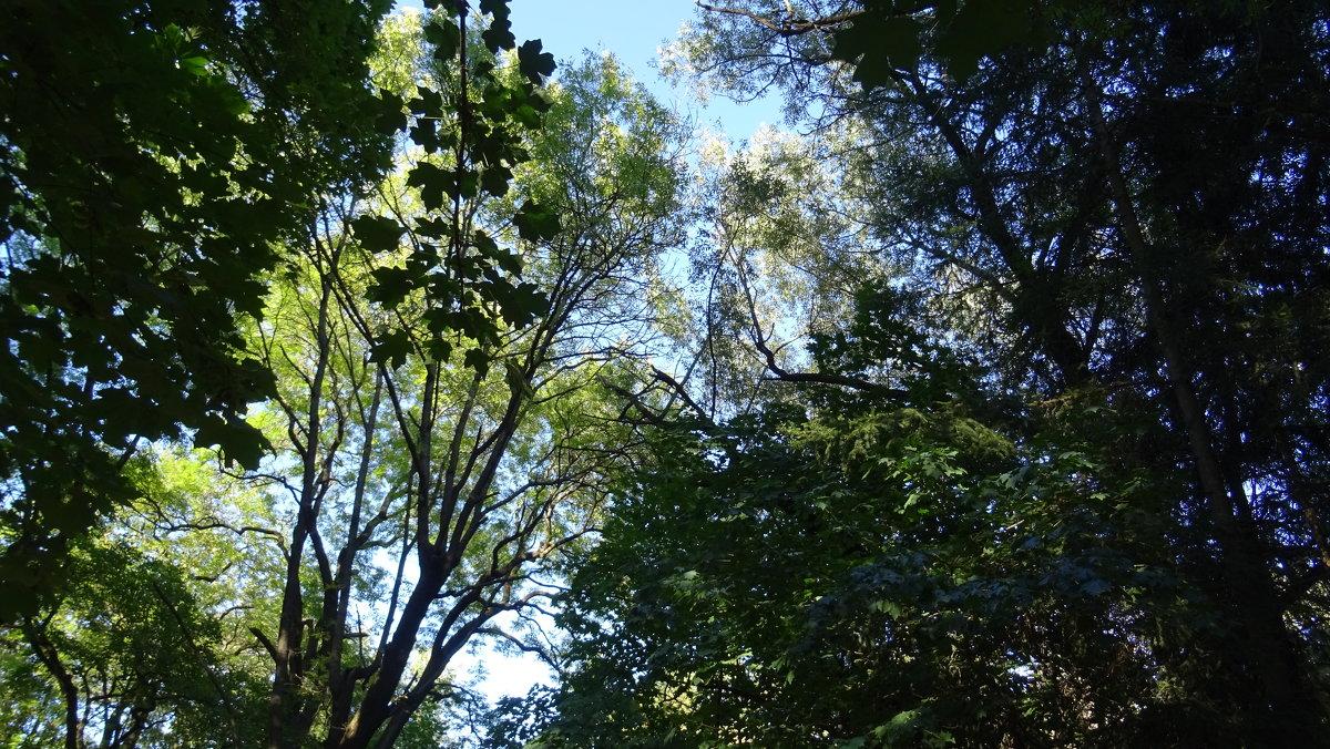 Начало октября, все еще зеленое - татьяна