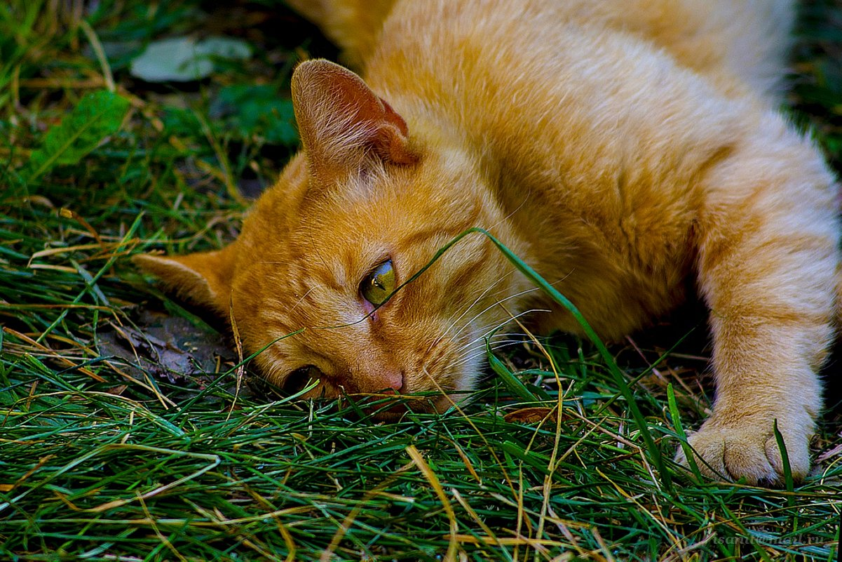 Наглая, рыжая морда. Утомилась... - isanit Sergey Breus