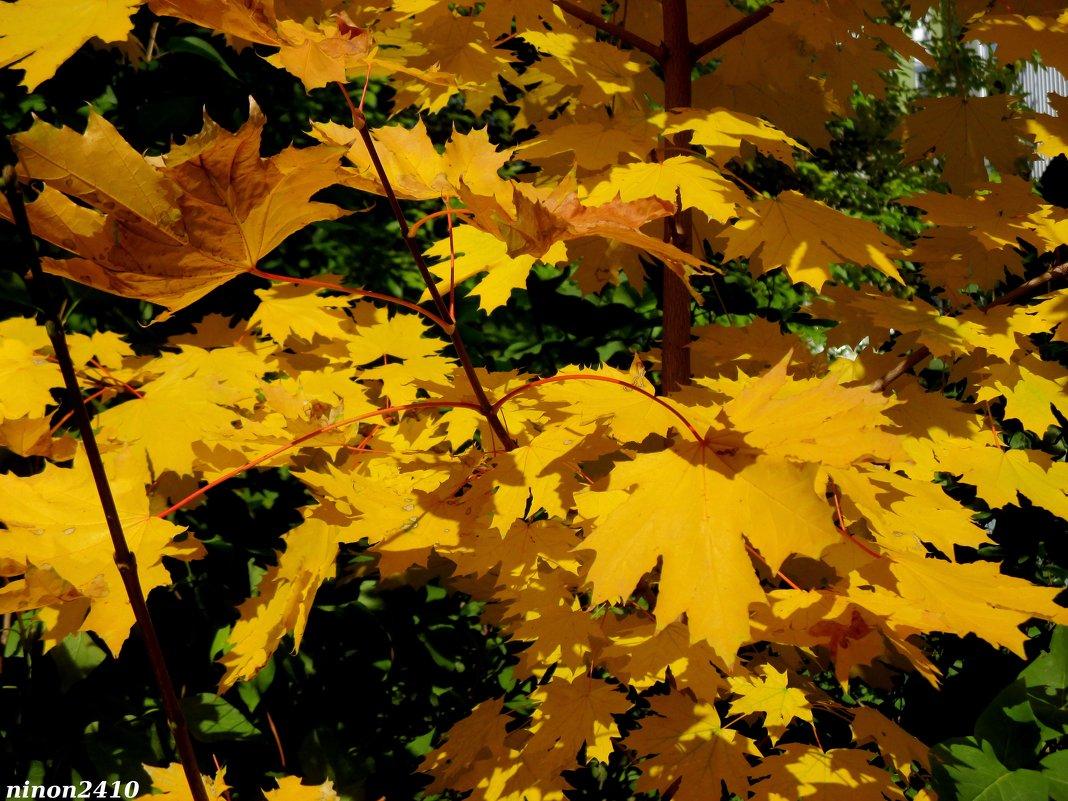 Золотая осень - Нина Бутко
