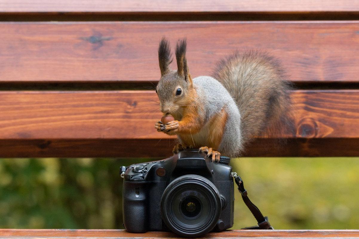 Обучение фотоисскуству - Alex Bush