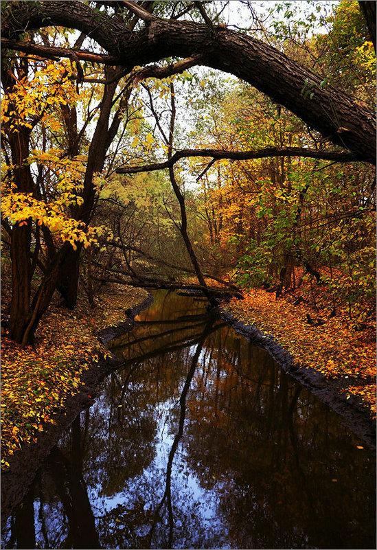 Река Серебрянка. Москва, Измайловский парк. - Дмитрий Потапов
