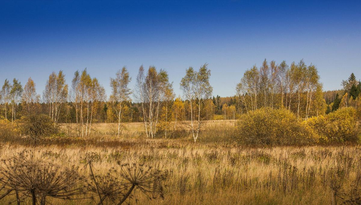 Золотая осень. - Владимир Буравкин