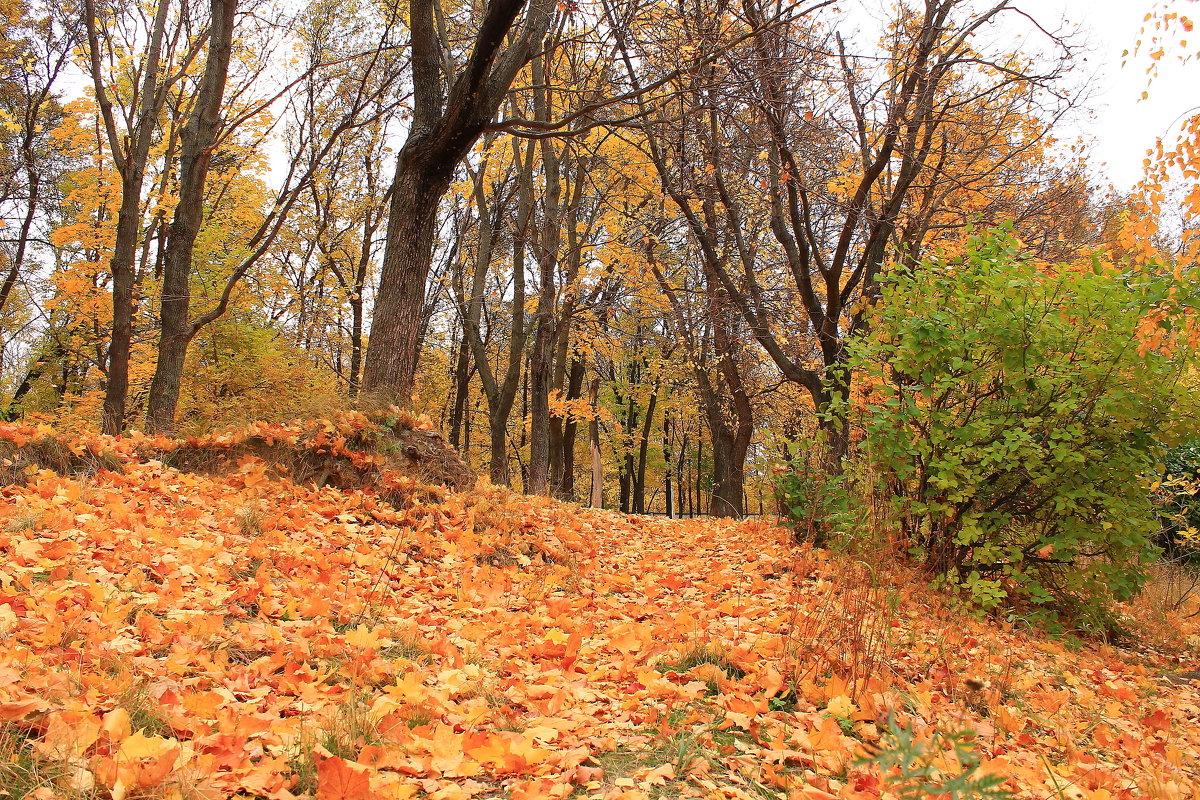 Прощальные песни опавшей листвы - Татьяна Ломтева
