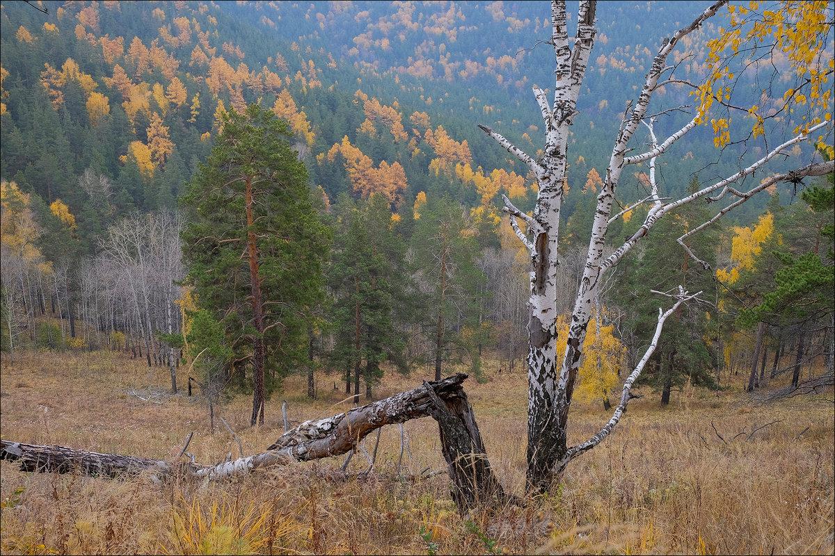 Осень ... - Николай