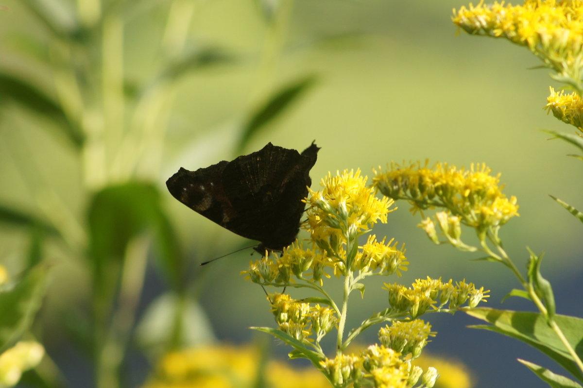Бабочка - Ольга Давыдова