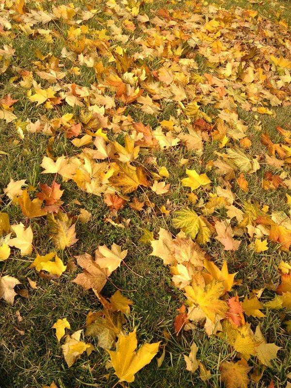 На ковре из желтых листьев... - Аlexandr Guru-Zhurzh